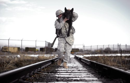 soldier and dog on suggested items page